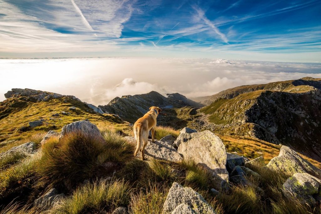 Dog Friendly Destinations to visit in the UK 2019