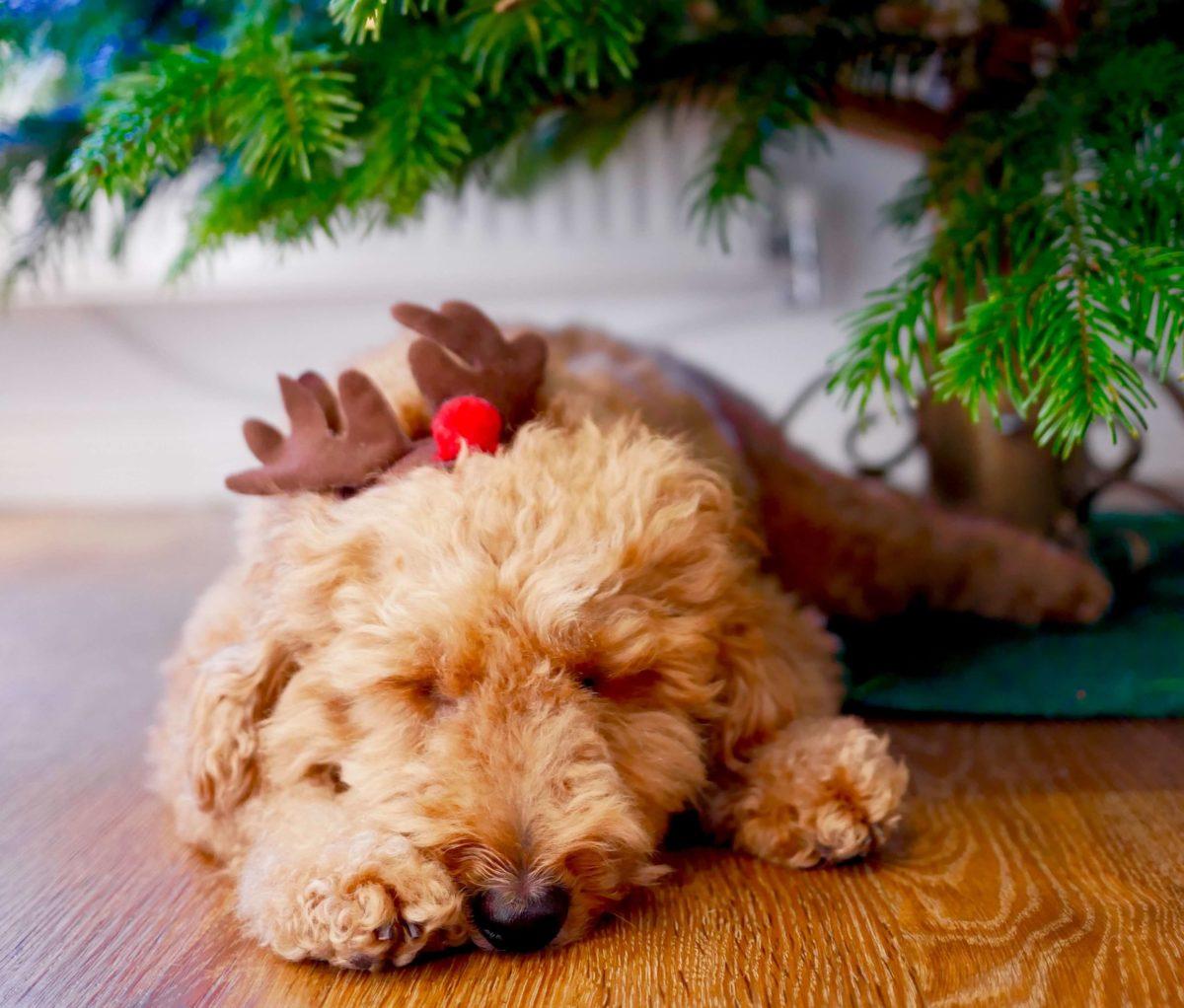 Keep your dog safe during Christmas