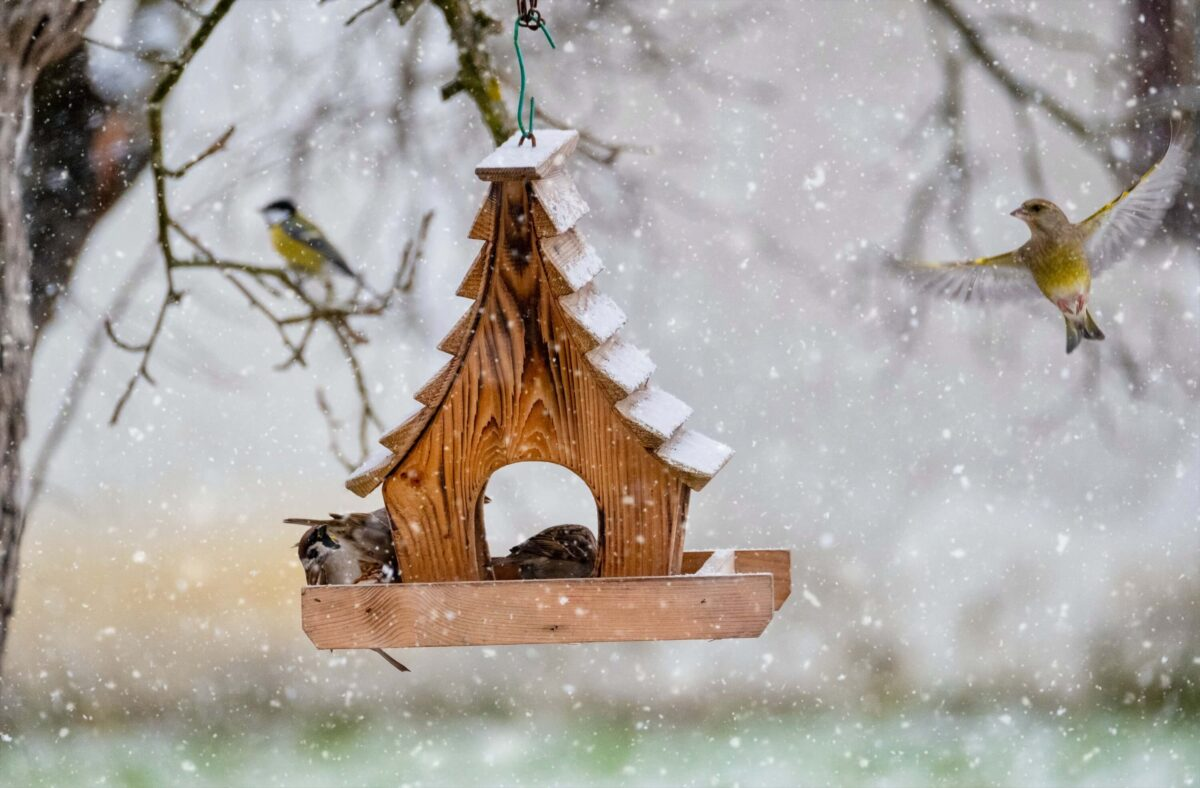 How to attract wild birds to your garden in the winter