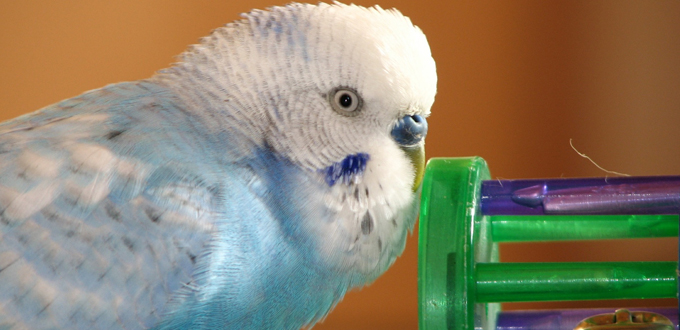 Indoor bird toys at Cuddles Pet Store