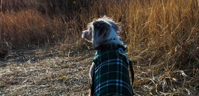 Dog Coats & Clothes at Cuddles Pet Store
