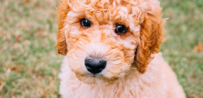 Dog Suplies at Cuddles Pet Store
