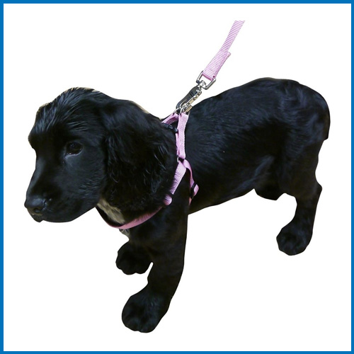 Rosewood Dog Collar, Leads & Harness Offer